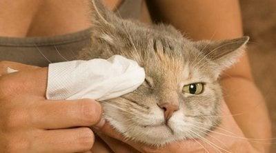 Ojos rojos en gatos: causas y soluciones