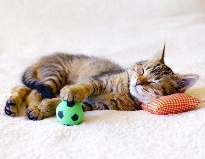 Consejos para que tu gato duerma toda la noche