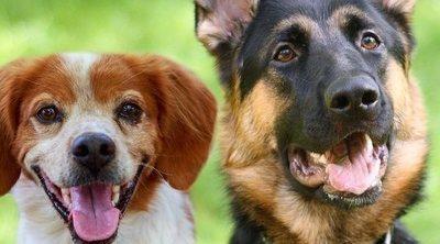 Las 10 razas de perro más fieles y leales
