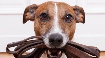 Acogida de animales: qué hacer si quieres ser casa de acogida