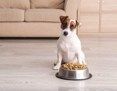 Snacks para perros: escoge los mejores