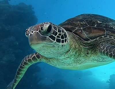 Hibernación de las tortugas: todo lo que necesitas saber