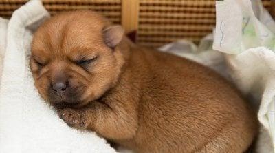Consejos para que un cachorro duerma toda la noche