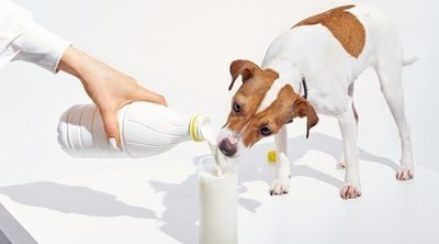 Calcio para perros: ¿son necesarios los suplementos?