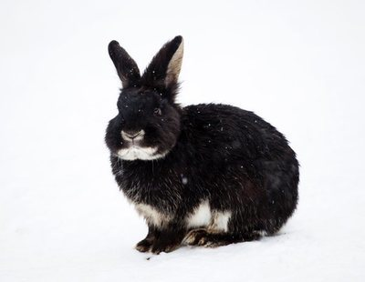 Cómo proteger a tu conejo del frío