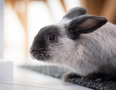 Heces de los conejos: tipos y aspectos a tener en cuenta