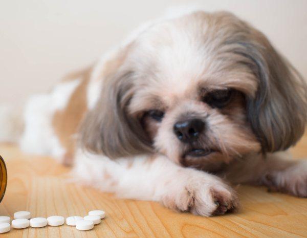 medicamento pregnancy infeccion digestivo y diarrea linear unit perros