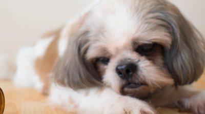 La gastroenteritis en los perros