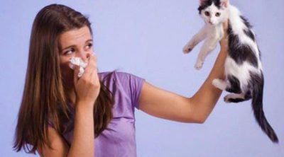 Evitar y minimizar los síntomas de la alergia a los gatos