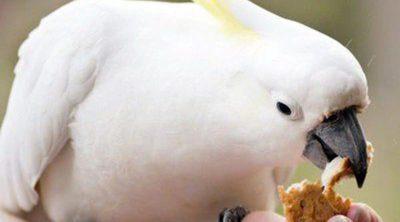 Cómo alimentar correctamente a un pájaro