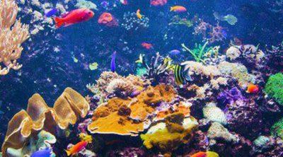 Cómo limpiar un acuario