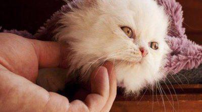 Dónde y cómo acariciar a un gato