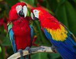 Cómo detectar a un pájaro enfermo