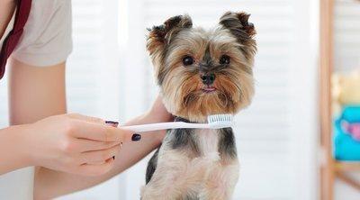Cómo limpiar los dientes de un perro