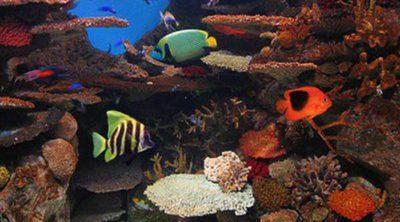 Peces de acuario