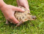 C�mo saber la edad de tu tortuga