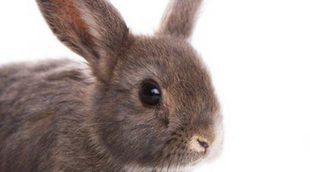 Mi conejo muerde los cables: cómo evitarlo