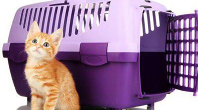 Formas de transportar a tu gato