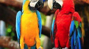 Pájaros que hablan