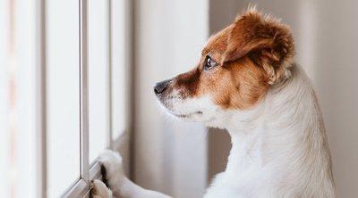 Razas de perros que no deben vivir en un piso