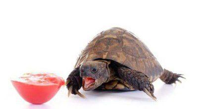 ¿Qué comen las tortugas?