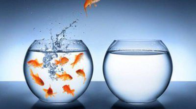 Enfermedades de los peces: punto blanco