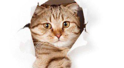 Claves para entender el comportamiento de nuestro gato