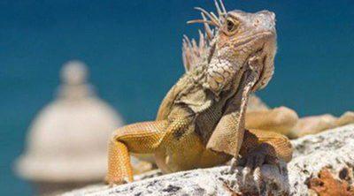 Alimenta a tu iguana correctamente