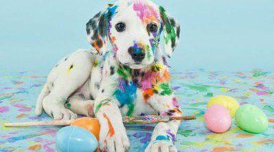 Normas y consejos para educar a tu perro