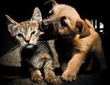 Mascotas para personas que pasan poco tiempo en casa