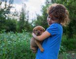 La filariosis en perros s ntomas y tratamiento - Como saber si tengo pulgas en casa ...