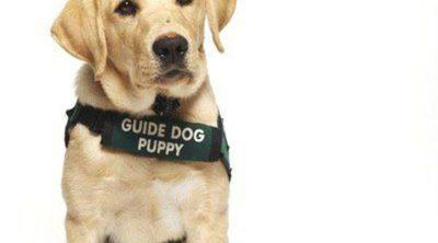 Pautas y consejos para cuidar a un perro guía