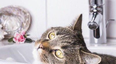 Cómo limpiar los ojos de un gato