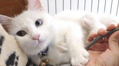 Estrés en gatos: Síntomas, prevención y tratamiento