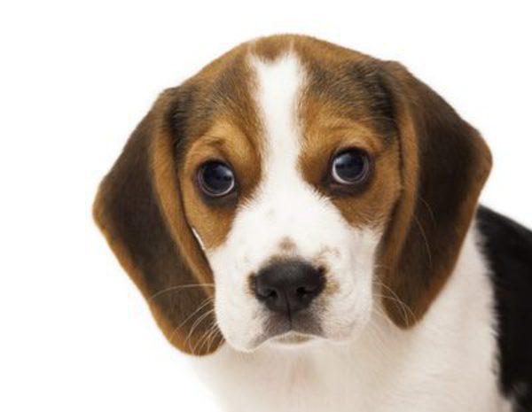 Los 12 perros m s bonitos bekia mascotas - Los salones mas bonitos ...