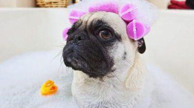 Bañar a tu perro en cinco sencillos pasos