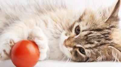 Reducir el estrés de nuestro gato en 5 pasos