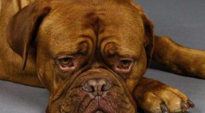 Estrés en perros: Síntomas, prevención y tratamiento