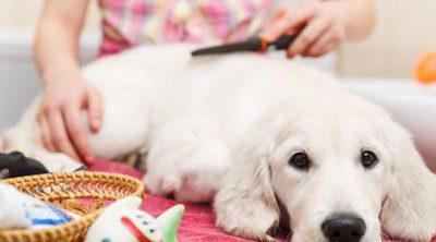 Cómo cuidar el pelo de tu perro