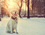 ¿Qué hacer si a mi perro le huele el aliento?