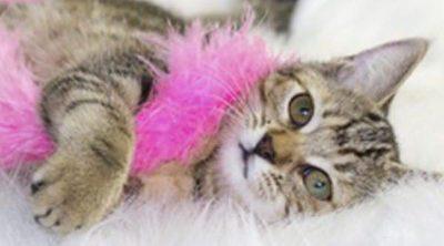 Tipos de juguetes para gatos: ¿Cuáles son los más adecuados?