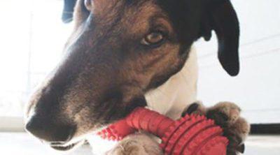 Tipos de juguetes para perros: ¿Cuáles son los más adecuados?