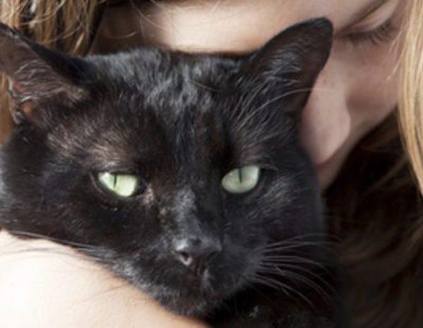Resultado de imagen de gato bombay