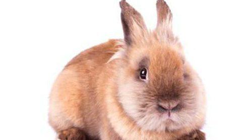 Mi conejo está gordo: ¿Cómo puedo hacer que pierda peso?