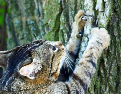¿Qué puedo hacer si mi gato me araña?