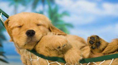 Normas y consejos que tener en cuenta a la hora de ir a la playa con tu perro