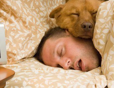 ¿Es bueno acostumbrar a mi perro a dormir en mi cama?