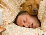 �Es bueno acostumbrar a mi perro a dormir en mi cama?