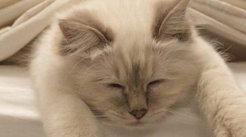¿Es bueno acostumbrar a mi gato a dormir en mi cama?