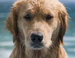 �C�mo puedes saber si tu perro tiene calor?
